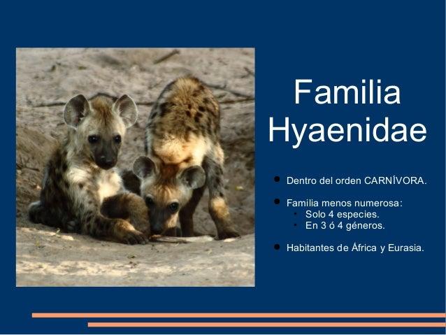 Familia hyaenidae Slide 2