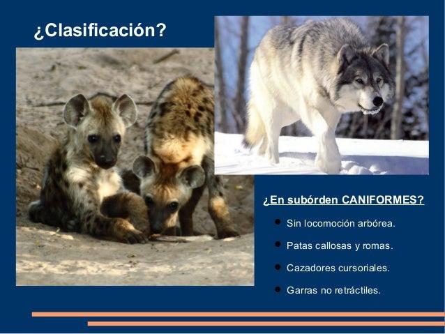Familia hyaenidae Slide 3