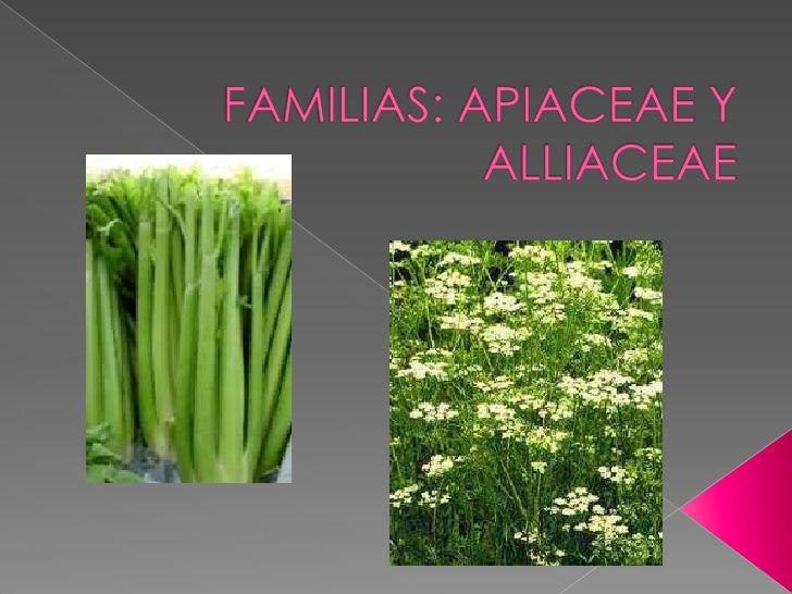 FAMILIAS: APIACEAE Y ALLIACEAE<br />