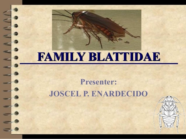 FAMILY BLATTIDAE Presenter: JOSCEL P. ENARDECIDO