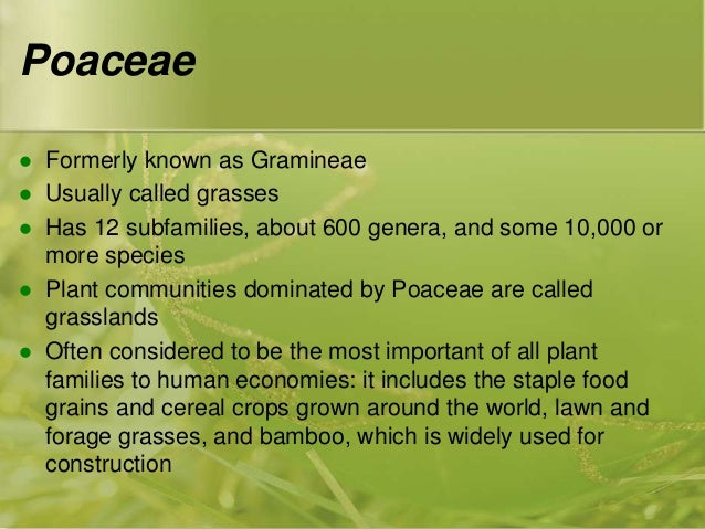 economic importance of poaceae pdf