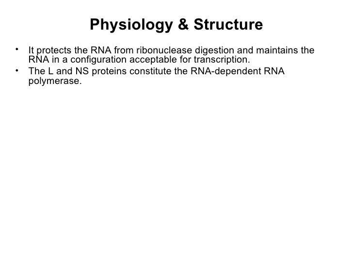Physiology & Structure•   It protects the RNA from ribonuclease digestion and maintains the    RNA in a configuration acce...