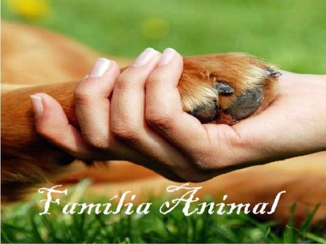 """Nesse projeto """"Melhorar a vida das  pessoas"""" tivemos a ideia de doar  cães, pois a pessoa que possui  animais de estimaçã..."""
