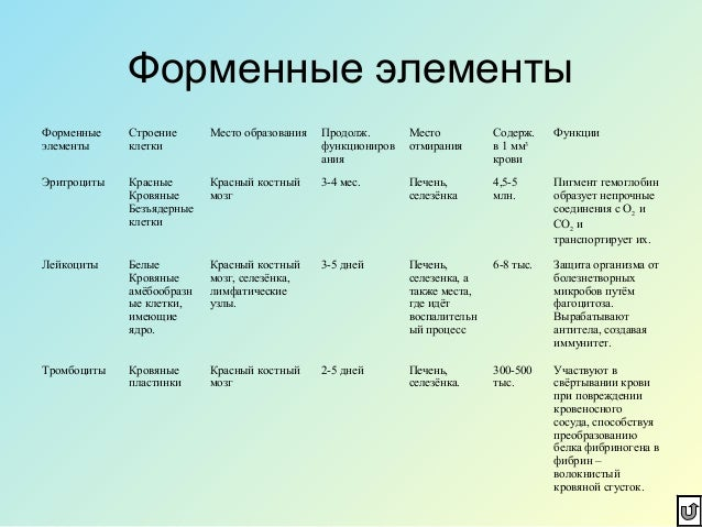 Презентация На Тему Эритроциты