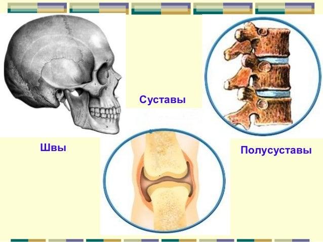 Презентации скелета на конечности тему