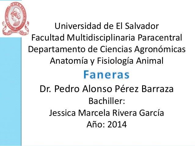 Universidad de El Salvador Facultad Multidisciplinaria Paracentral Departamento de Ciencias Agronómicas Anatomía y Fisiolo...