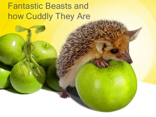 Fantastic Beasts and how Cuddly They Are
