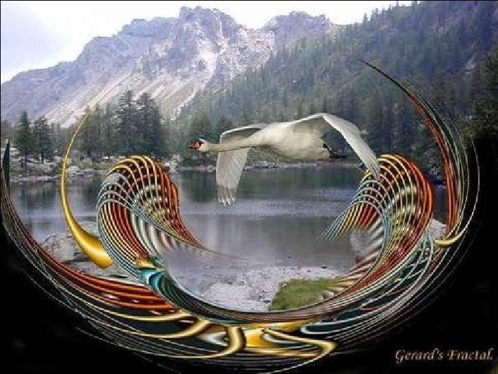 Fantastiques Oiseaux Slide 2