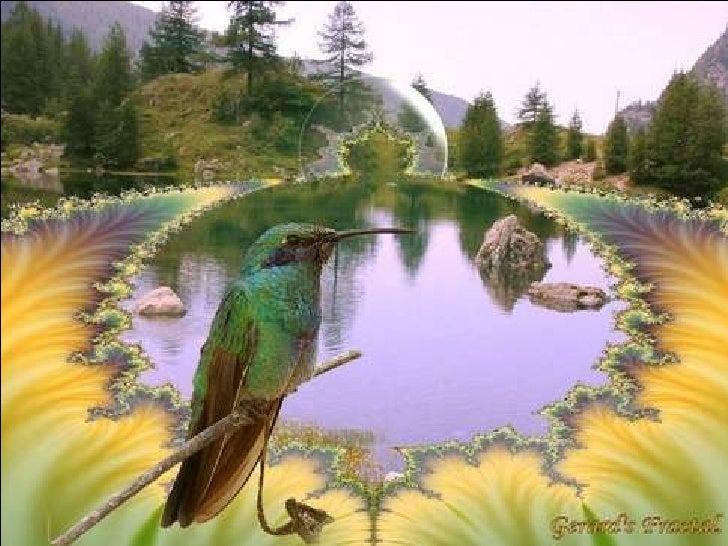 Fantastiques Oiseaux Slide 3