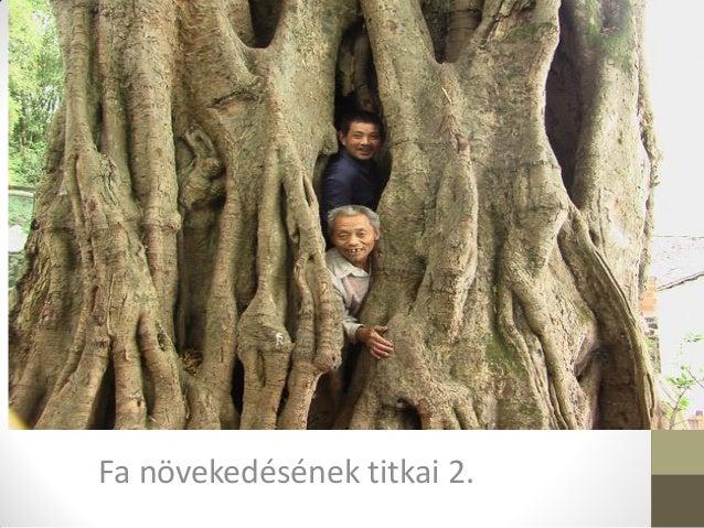 Fa növekedésének titkai 2.