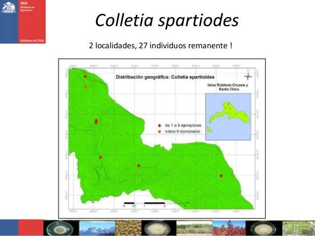 Colletia spartiodes2 localidades, 27 individuos remanente !
