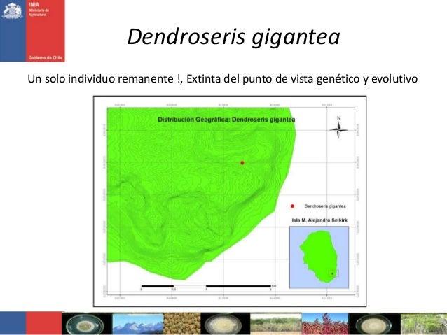 Dendroseris giganteaUn solo individuo remanente !, Extinta del punto de vista genético y evolutivo