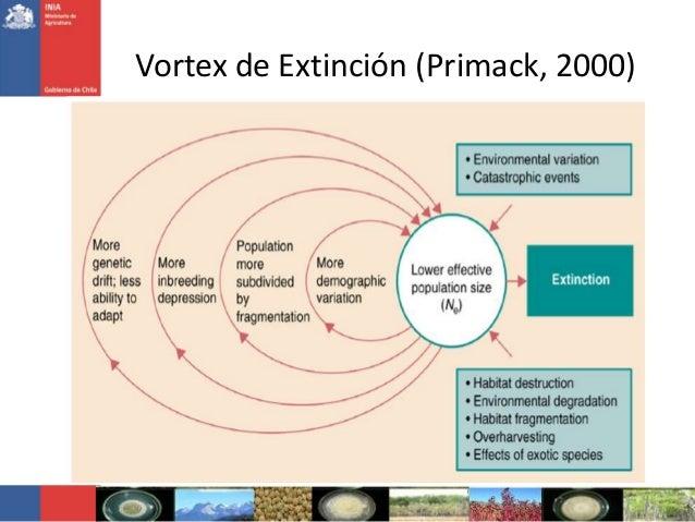 Vortex de Extinción (Primack, 2000)