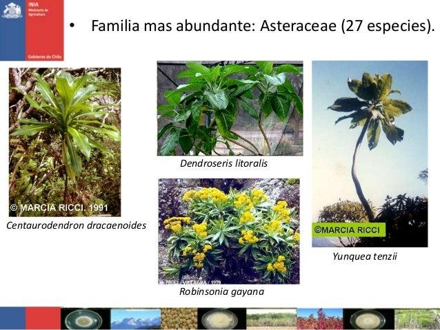 Centaurodendron dracaenoidesDendroseris litoralisRobinsonia gayanaYunquea tenzii• Familia mas abundante: Asteraceae (27 es...