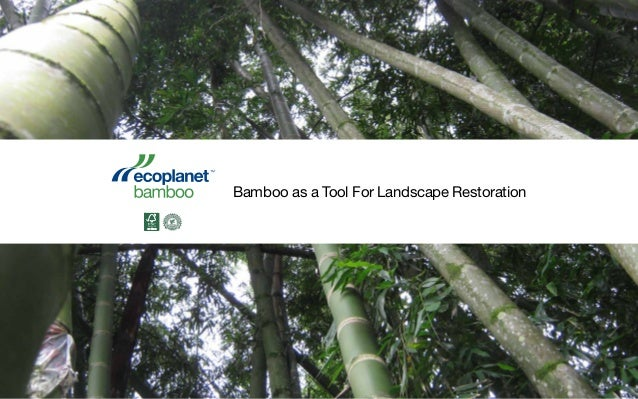 Bamboo as a Tool For Landscape Restoration
