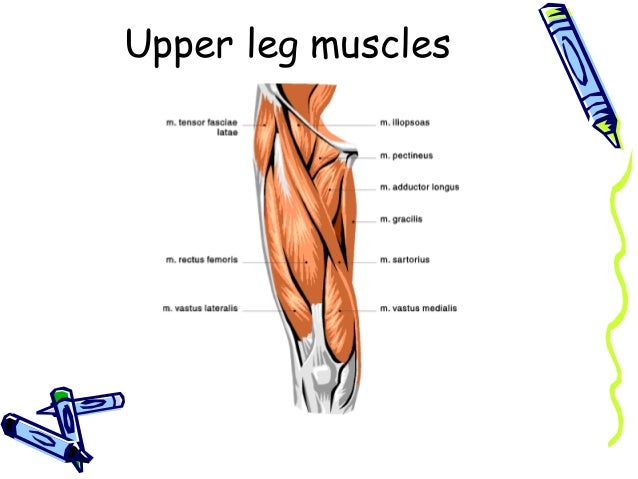 Fap muscles and nerves lower arm muscles 14 ccuart Gallery