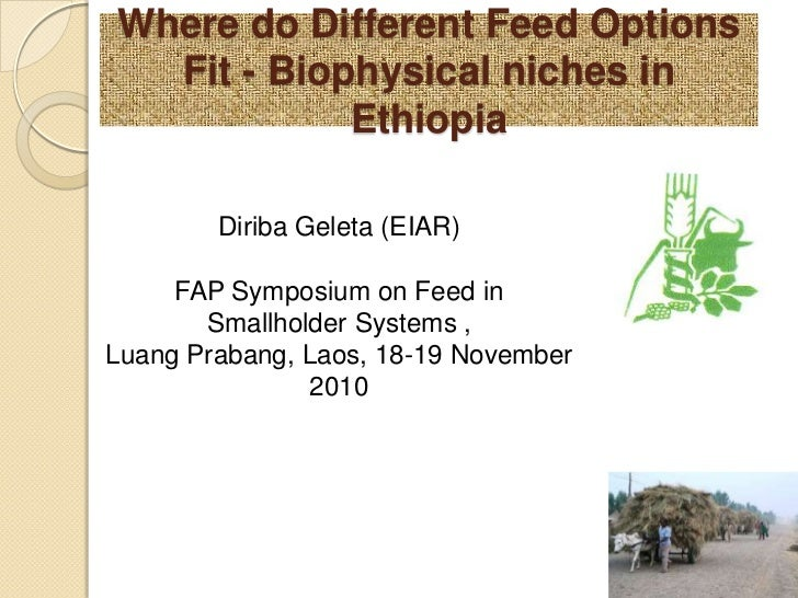 Where do Different Feed Options Fit - Biophysical niches in Ethiopia <br />DiribaGeleta (EIAR)<br />FAP Symposium on Feed ...