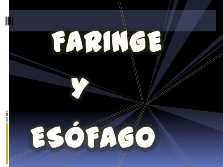 FARINGE<br />Y<br />ESÓFAGO<br />