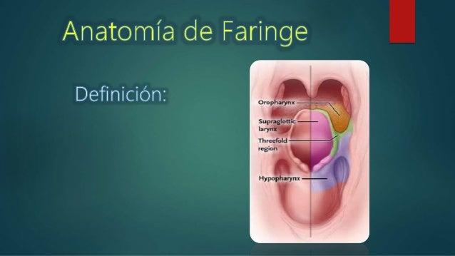 Anatomia de Faringe