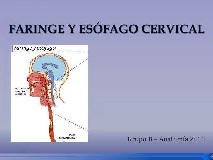 Faringe y esofago cervical