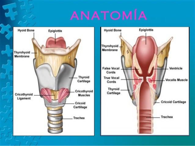 Anatomía Radiológica de Faringe y Laringe