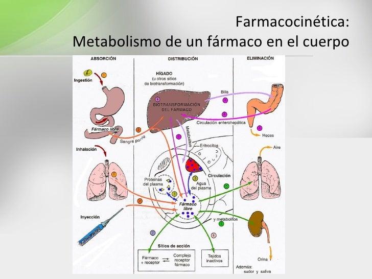 metabolismo glucogeno mejores soluciones