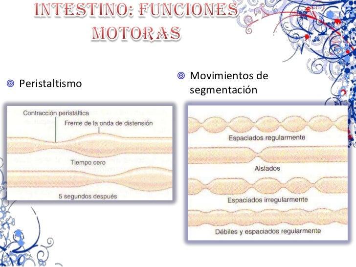 Secreción del HCl<br />ESTIMULA POR:<br /><ul><li>ACh (estímulo vagal)
