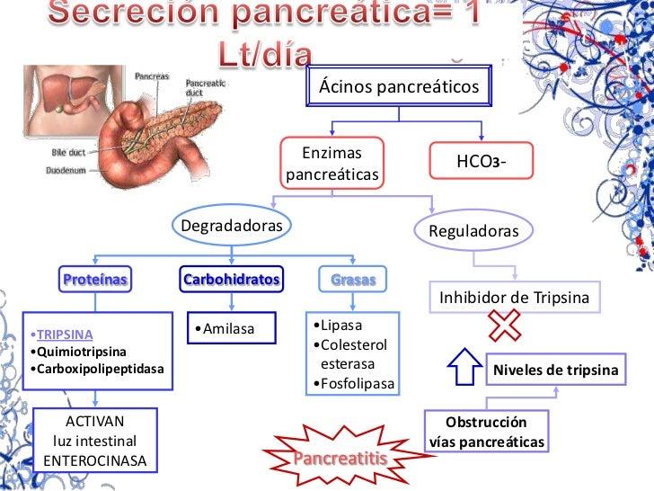 Secreción del factor intrínseco<br />Secretado por<br />Función<br />GASTRITIS<br />CRÓNICA<br />Absorción<br />vitamina B...