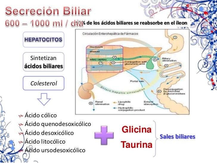 MOCO<br />Secreciones pilóricas:MOCO Y GASTRINA<br />lubrica y permite el movimiento<br />GASTRINA<br />Hormona <br />Célu...