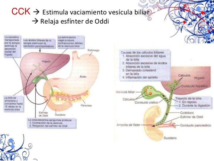 Intestino delgado y grueso<br />Funciones<br />ABSORTIVAS<br />MOTORAS<br />SECRETORAS<br />Enterocitos<br />Propulsivos<b...