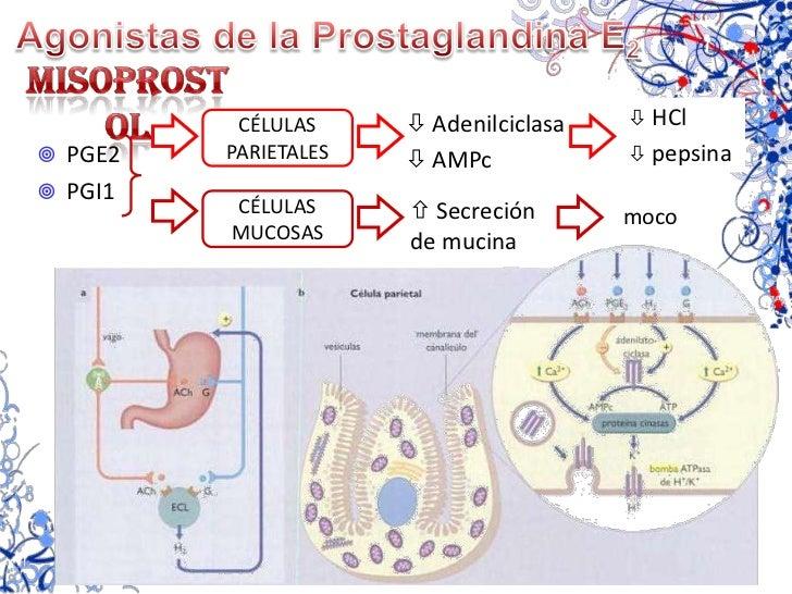Encefalinas</li></ul>  (mucosa GI)<br />GIP<br />Motilina<br />Secretina<br />CÉLULAS<br />DE PANETH<br />Inmunidad<br />