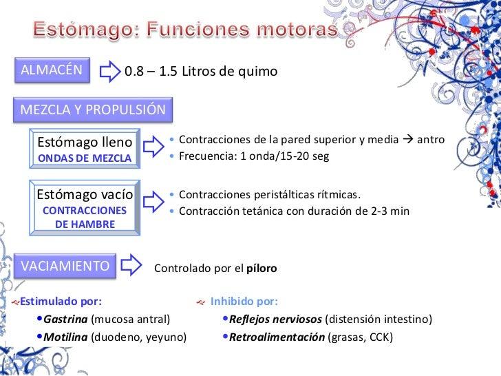 Factor intrínseco</li></ul>CÉLULAS PRINCIPALES<br /><ul><li>Pepsinógeno</li></ul>Estómago<br />Funciones<br />MOTORAS<br /...