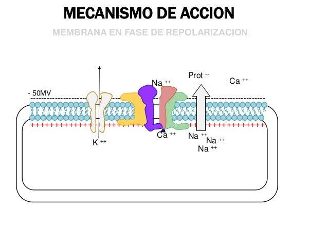pK: 7.9  H+ H+  Forma ionizada Catiónica  Forma no ionizada Base libre  •74 % •No actividad farmacológica •No atraviesan l...