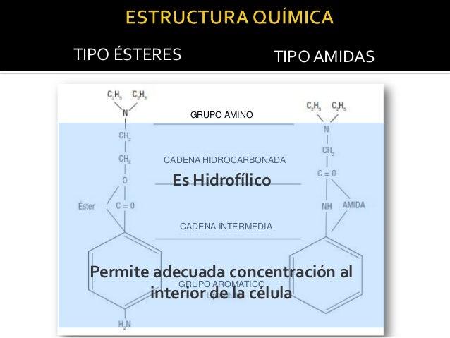 MECANISMO DE ACCION MEMBRANA EN REPOSO  Na ++  Prot --  Ca ++  -90 mv -60 mv  --------------------------------------------...