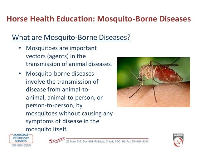vector organisms and the diseases they carry essay From the perspective of infectious diseases, vectors are the transmitters of  disease-causing organisms that is, they carry pathogens from one host to  another.