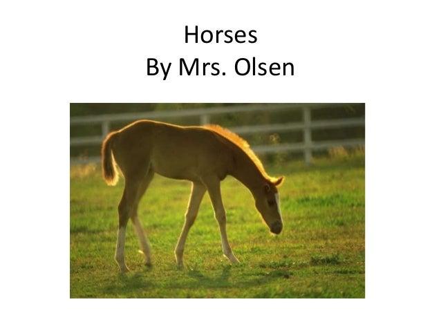 Horses By Mrs. Olsen