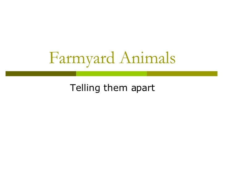 Farmyard Animals Telling them apart