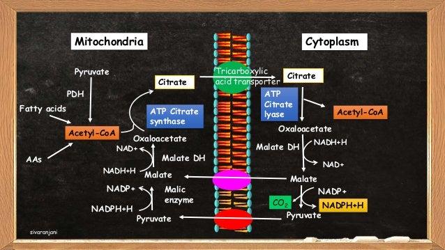 De Novo synthesis of fatty acids