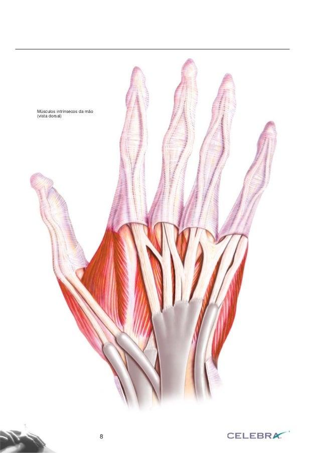 Fascículo anatomia da mão