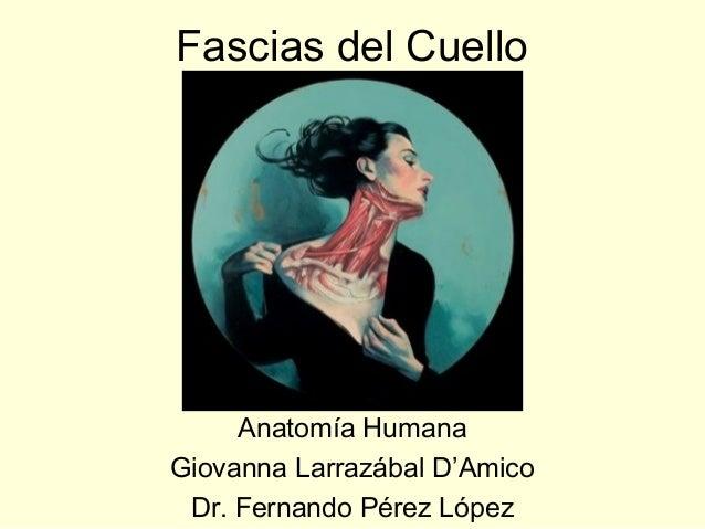 Fascias del Cuello     Anatomía HumanaGiovanna Larrazábal D'Amico Dr. Fernando Pérez López