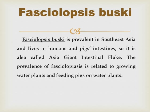 Fasciolopsis buski                        Fasciolopsis buski is prevalent in Southeast Asiaand lives in humans and pigs' ...