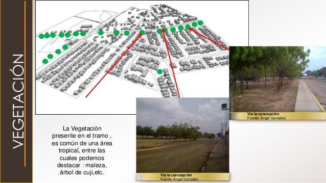 VEGETACIÓN La Vegetación presente en el tramo , es común de una área tropical, entre las cuales podemos destacar : maleza,...