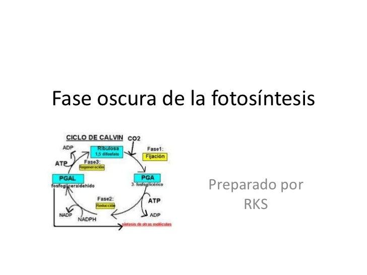 Proceso de fotosintesis yahoo dating 8