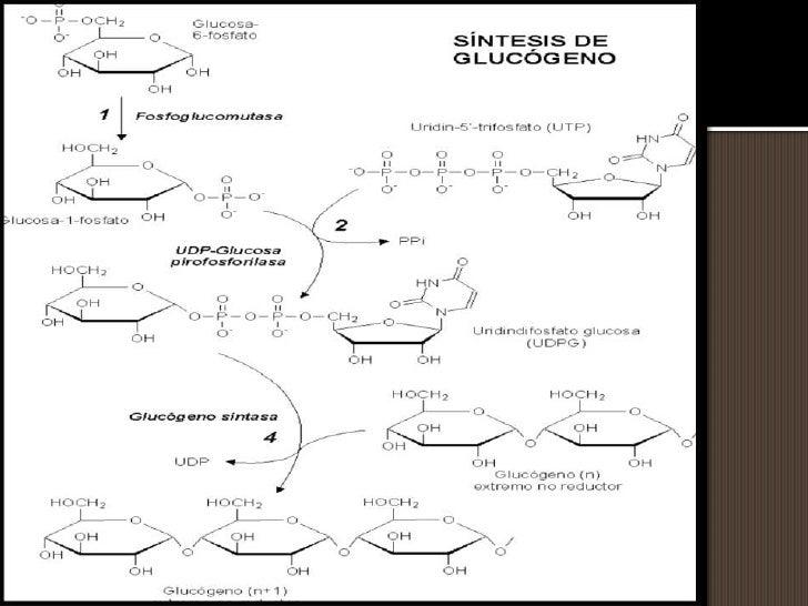 Aprender cómo Ibuprofeno metabolismo