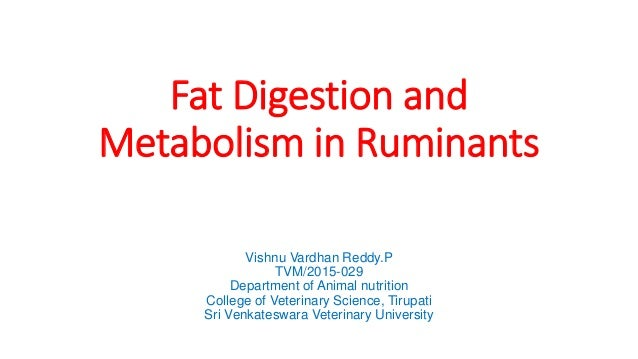 Fat Digestion and Metabolism in Ruminants Vishnu Vardhan Reddy.P TVM/2015-029 Department of Animal nutrition College of Ve...