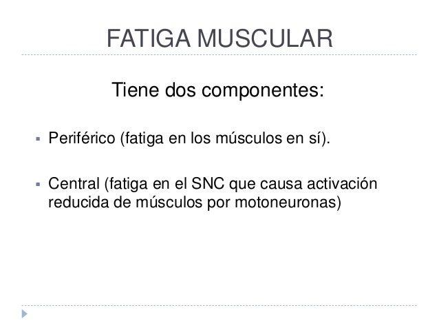 FATIGA MUSCULAR Tiene dos componentes:  Periférico (fatiga en los músculos en sí).  Central (fatiga en el SNC que causa ...