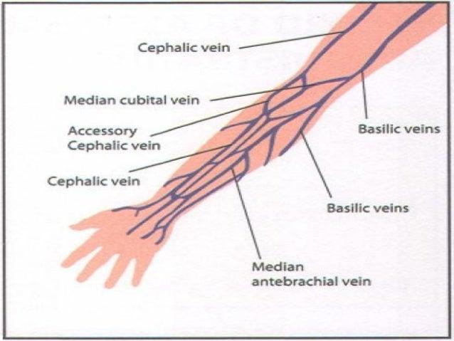 intravenous cannulation, Cephalic Vein
