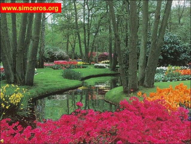 www.simceros.org