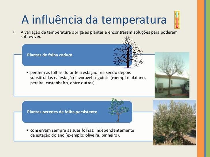 Fatores do meio que influenciam as plantas - Plantas que aguantan temperaturas extremas ...