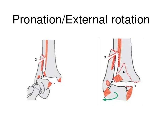 foot and ankle trauma derek park